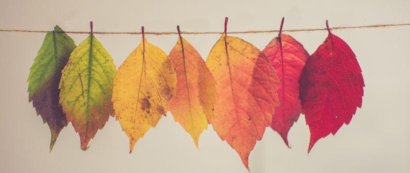 hojas de colores